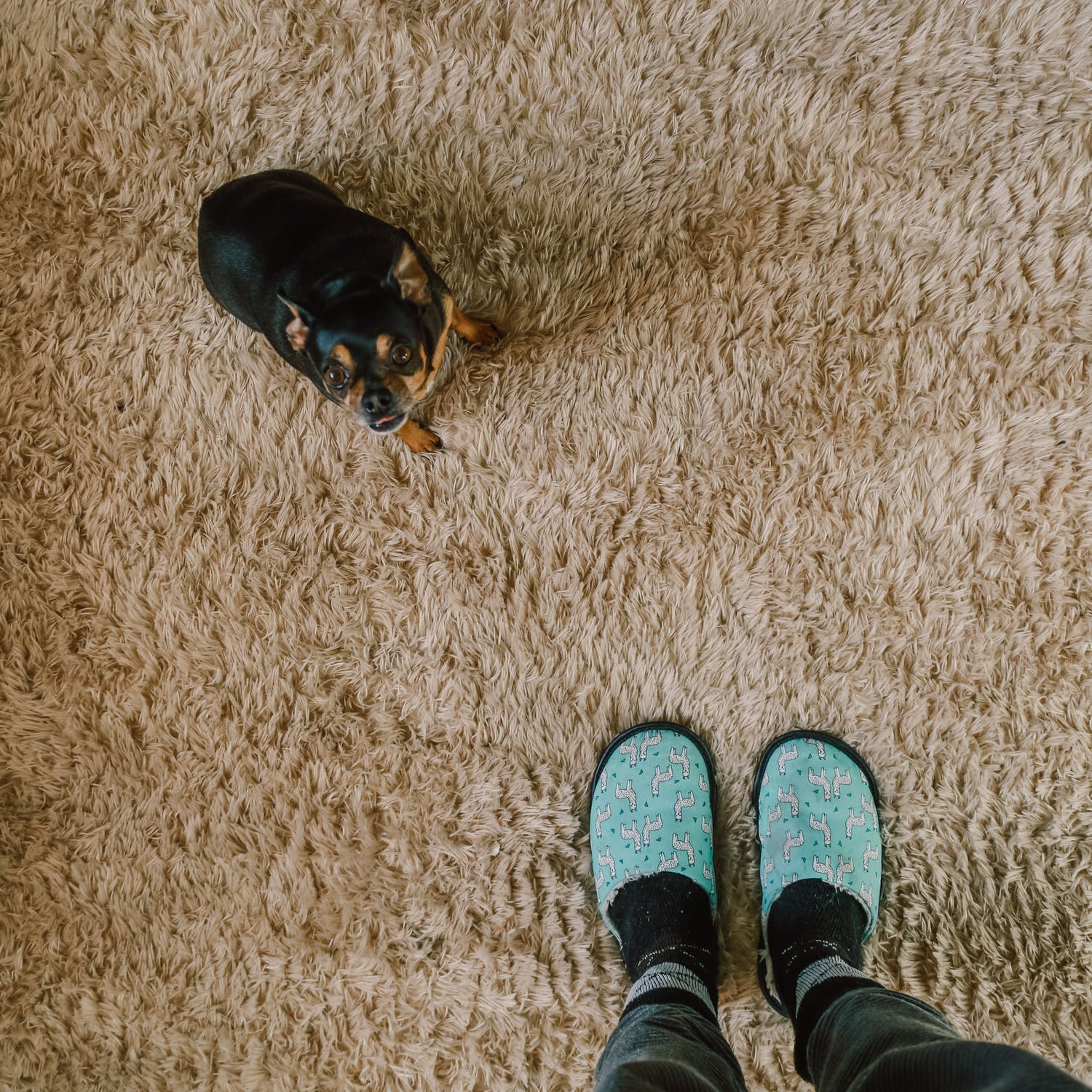 A STEP-BY-STEP GUIDE TO CARPET REMOVAL