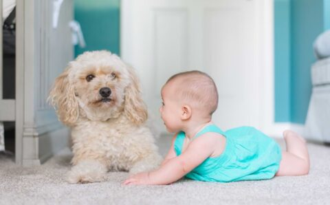Tips for Carpet Cleaning when Baby Starts Crawling